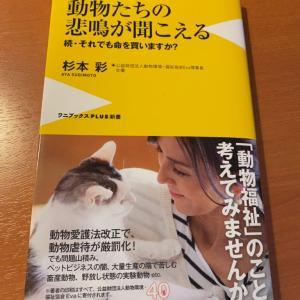 保護犬保護猫を譲渡しているペットショップのからくりに要注意!