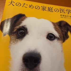 アンチノールが老犬におすすめ!成分や効果モエギタブとの違いとは?