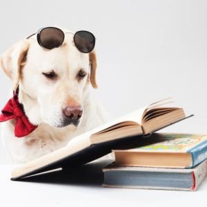 ペットに遺産を残す方法と遺言書の作り方!高齢になっても安心
