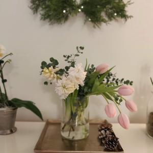 ヒヤシンスと桜