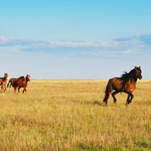 壮大な草原を持つ世界遺産話
