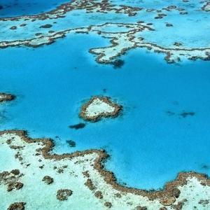 超わけがわかんない珊瑚礁についての話