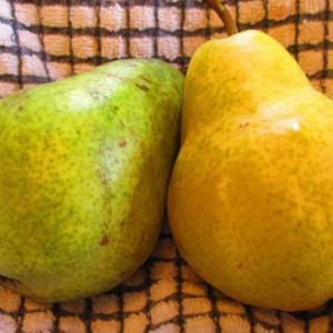 洋梨の食べ頃。How to Ripen Pears
