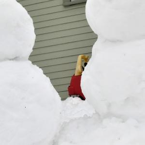 雪だるま日和。Snowmen