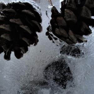 氷点下クラフト2020。Minnesota Winter Craft 2020