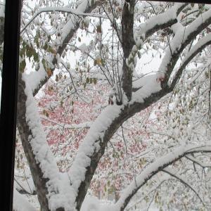 10月の吹雪。October Snowstorm