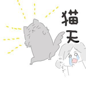 【財布が緩む】猫関係費【うちのアイドル】