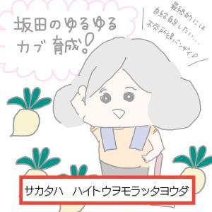 坂田のゆるゆるカブ育成ー品種一覧ー