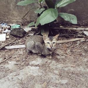 インドの猫さん犬さんは特徴的