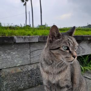 公園猫のアニマルコミュニケーション