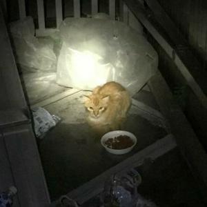虫を食べていた猫