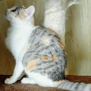 家族ができた猫  保護猫ゆめりの話
