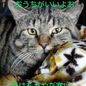 「二千円やるから猫を公園に戻せ」