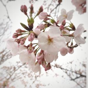 花開く時を夢見て♡まず、行動‼︎