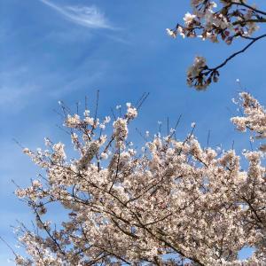 一期一会を大切にしてます〜桜が満開〜