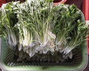 水菜を出荷