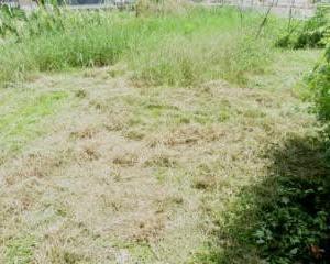 炎天下で畑の草刈り作業!長い時間作業しないようにしている