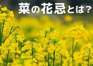 2月12日は司馬遼太郎さん命日「菜の花忌」
