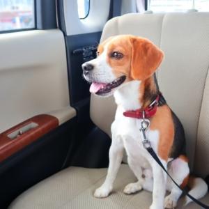車でお出かけ時にペットも安全安心!車内にあると便利な快適グッズ