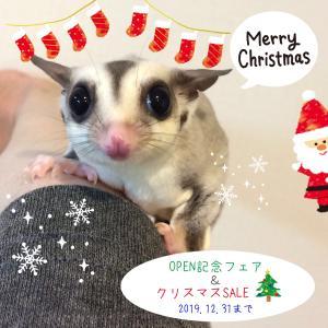 クリスマスSALE開催🎄