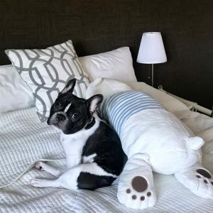 抱き枕を使っていますか?