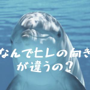 イルカと魚の尾びれの向きに生物のロマンを感じてしまう…