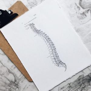 骨盤職人で腰周りの違和感を改善【筋トレの効きも良くなるかも】
