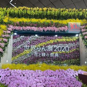 【東京ドーム】世界らん展2020-花と緑の祭典-【ディスプレイ作品】