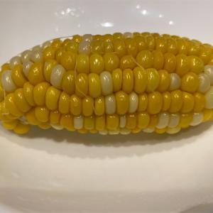 【家庭菜園】トウモロコシ(スイートコーン)の収穫