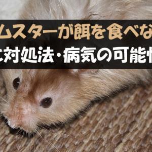 ハムスターが餌・ペレットを食べない原因と対処法【病気の可能性は?】