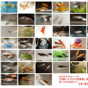 可愛いメダカの写真展 (4) 〜これが展示写真です!~