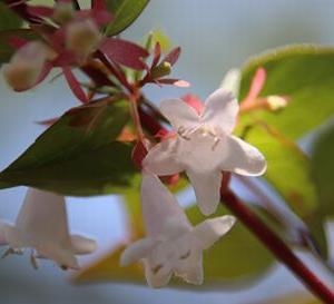 アジサイと 名も知らぬ小さな花たち