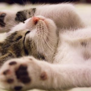 猫と暮らすミニマリスト~猫と人が賃貸でも安心して暮らす部屋づくり