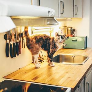 ミニマリストが持っているキッチン用品を数えてみました!~調味料編