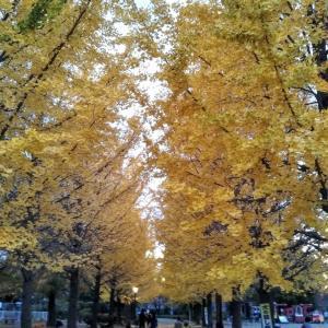 ミニマリストの休日~近所の公園を紅葉を見ながら散歩