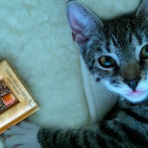 読書好きミニマリストの本の減らし方。捨て方から買い方まで。