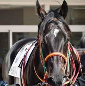 札幌記念2020予想~堅そうな軸馬のいるレース的中!