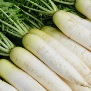 便秘解消には大根などに含まれる食物繊維や酵素がとっても大事です!