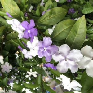 花の名前を知りたい
