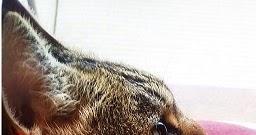 猫のリンパ腫治療中・活動報告③更新しました。