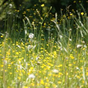 病院へ行かずに花粉症を対策する