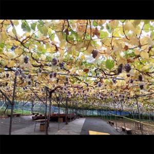 《秋の味覚を食べ尽くそう》埼玉県 秩父エリア 小松沢レジャー農園《そとあそびNO.159》
