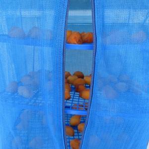 柿がいっぱいです