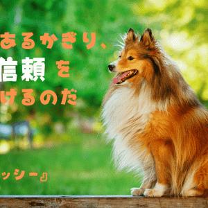 『名犬ラッシー』の名言から、頭でっかちでも本能を信じて行動できるようになる
