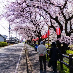 川越で綺麗な桜が見えるおすすめスポットをまとめて紹介