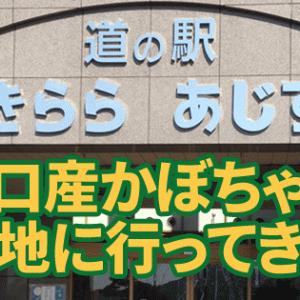 【秘宝】「道の駅 きららあじす」のカボチャスイーツが爆裂うまい!カボチャのためだけに阿知須まで行く価値はあるぞ!