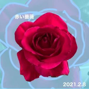 一輪の赤い薔薇