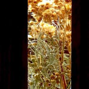 作品研究の旅 Herbarium8編
