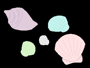 貝殻のイラスト