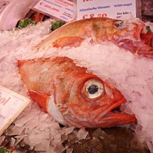 汚染魚から人体を守るために。魚の内臓はごみの溜まり場。食物連鎖で人間に影響が出る懸念も。